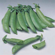 Snap Pea, Super Sugar Snap